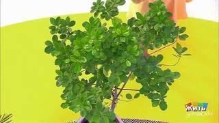 Растения-санитары. Жить здорово! Фрагмент выпуска от13.09.2017